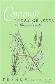 Common Texas Grasses