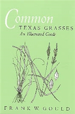 Common Texas Grasses