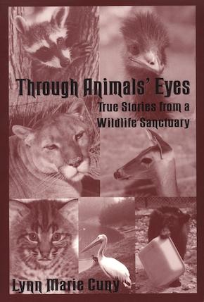 Through Animals' Eyes