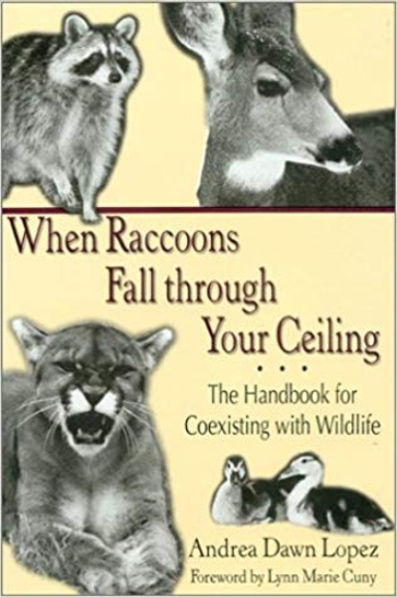When Raccoons Fall through Your Ceiling