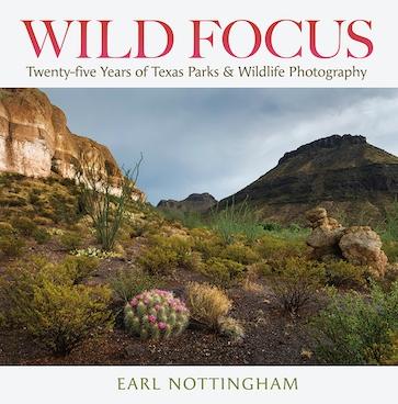 Wild Focus